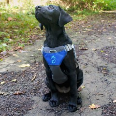 Dog Harness (2)